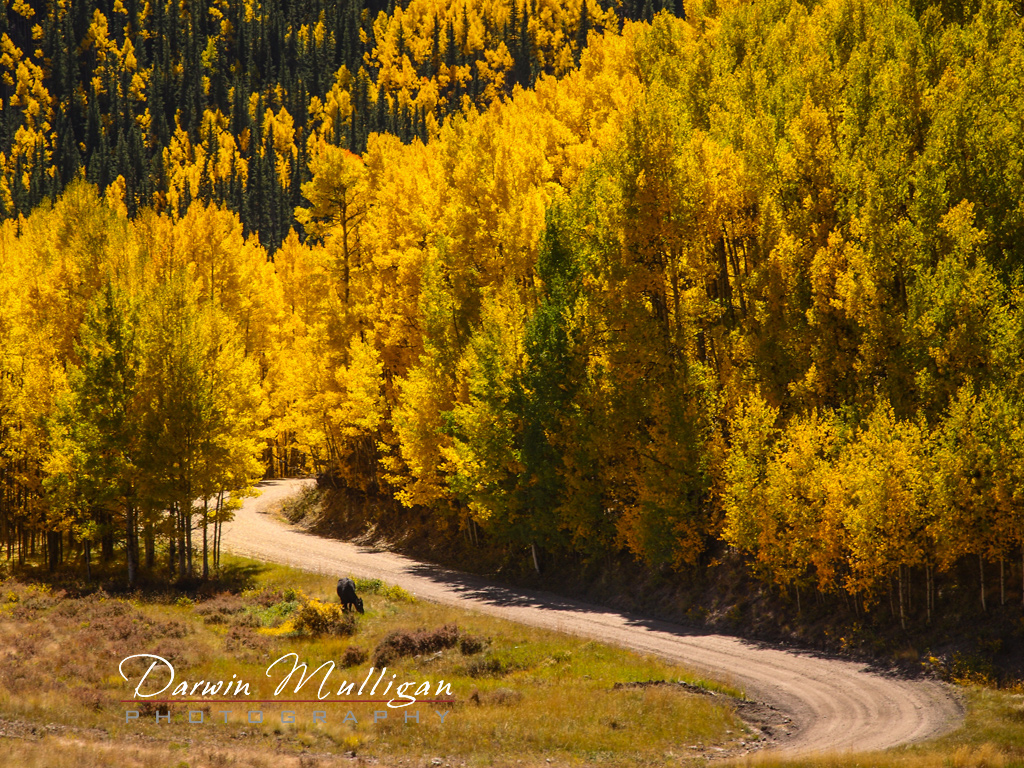Colorado-trail-through-forest-at-Lake-City-Area