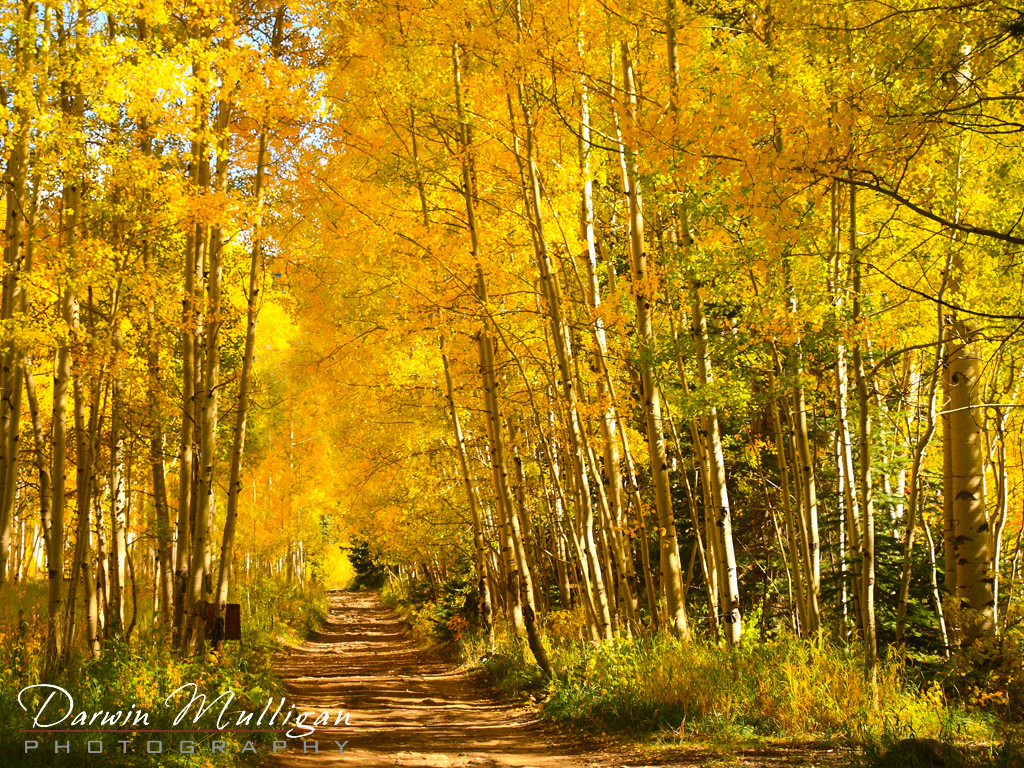 Colorado-trail-through-the-forest-in-the-fall-Crystal-City