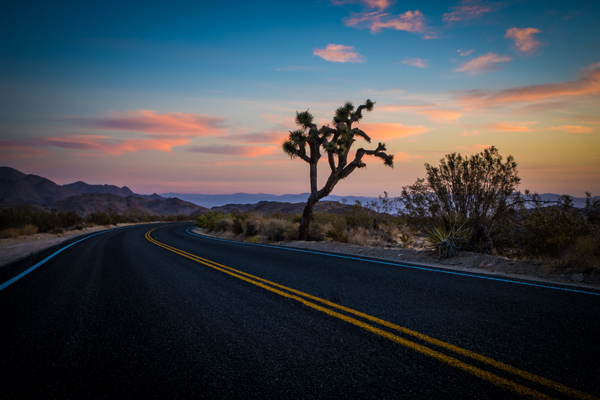 Joshua Tree National Park California Road Trip