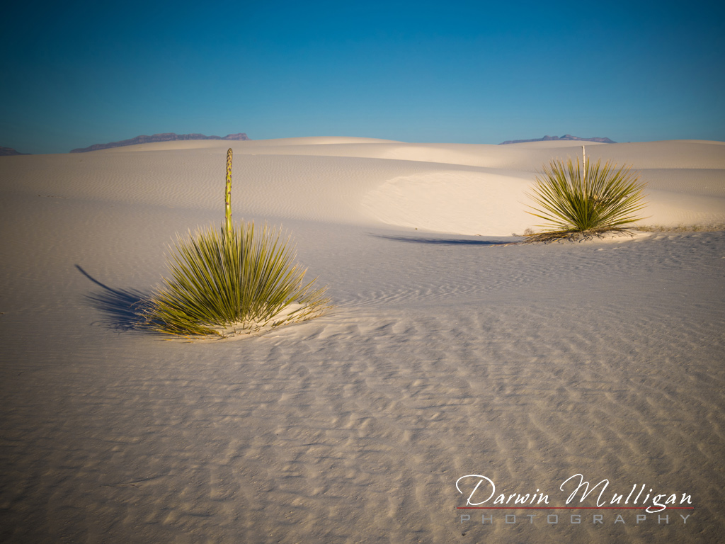 White-Sands-National-Monument-New-Mexico-early-morning