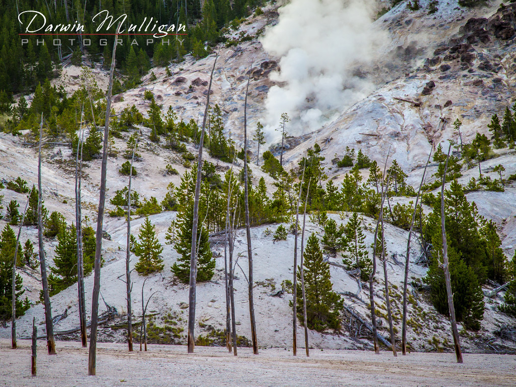 Yellowstone-National-Park-Wyoming-view-along-the-highway