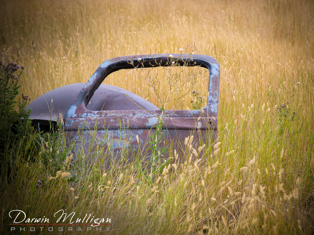 Abandoned-car-in-a-field-Kevin-Montana