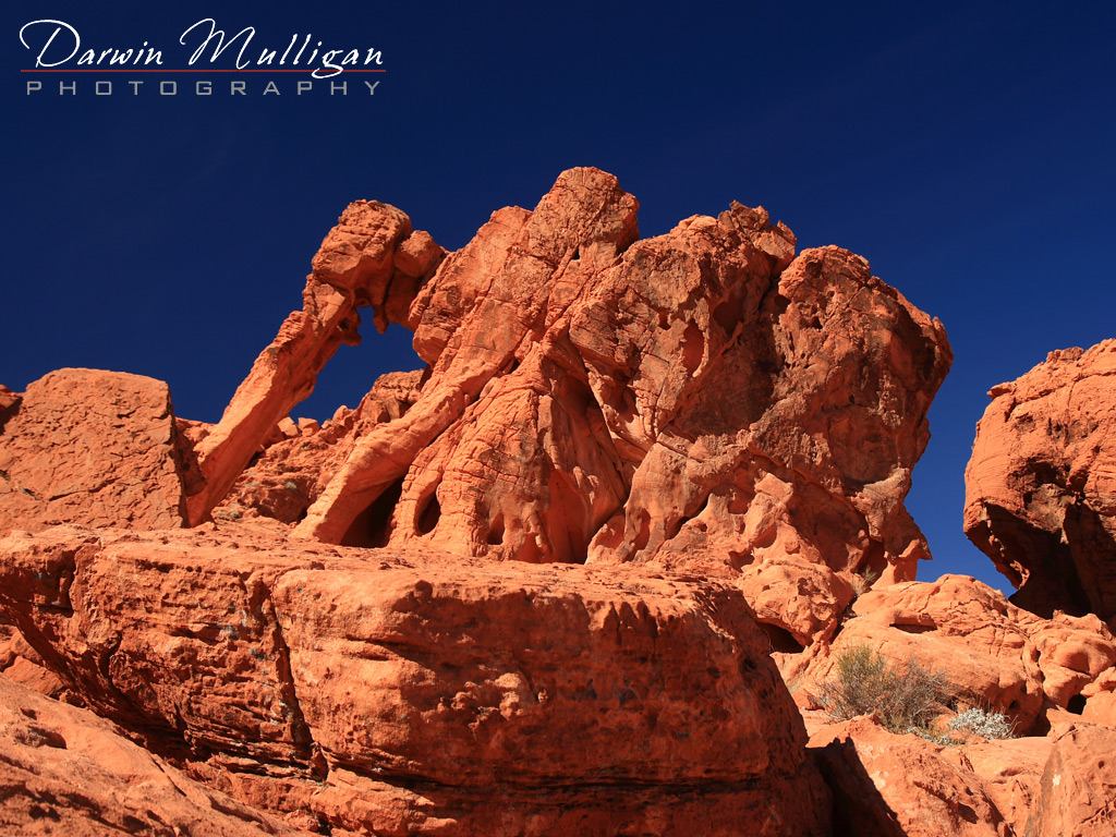 Elephant-Rock-at-Valley-of-Fire-State-Park-Nevada