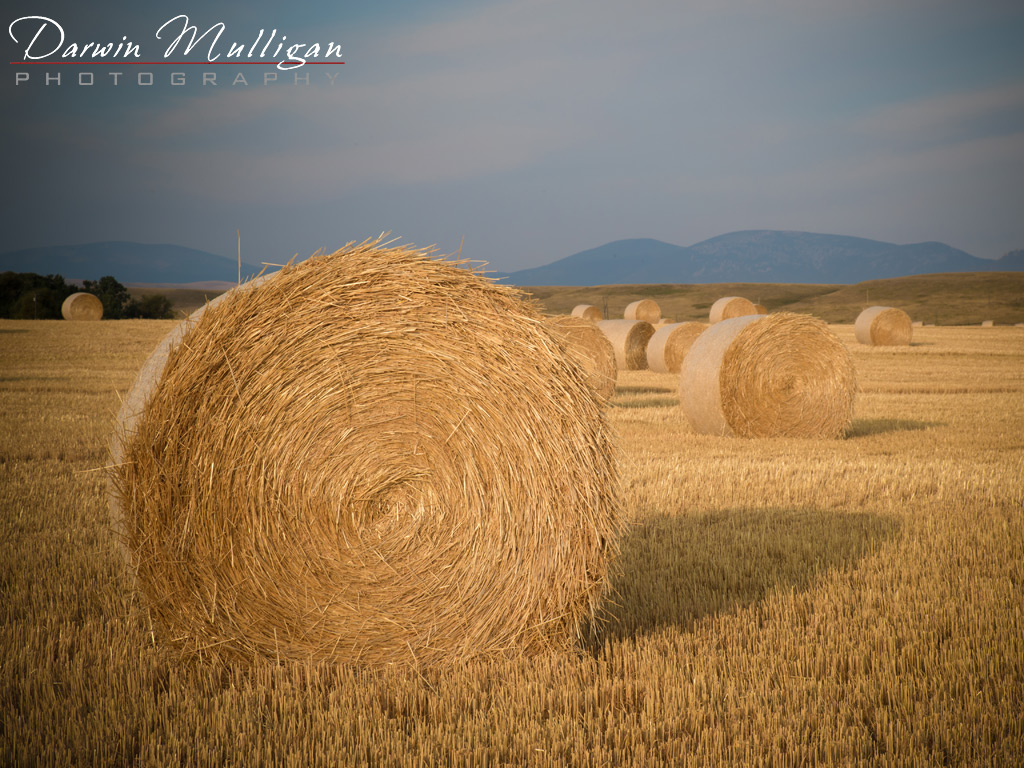 Fall-Harvest-east-of-Great-Falls-Montana